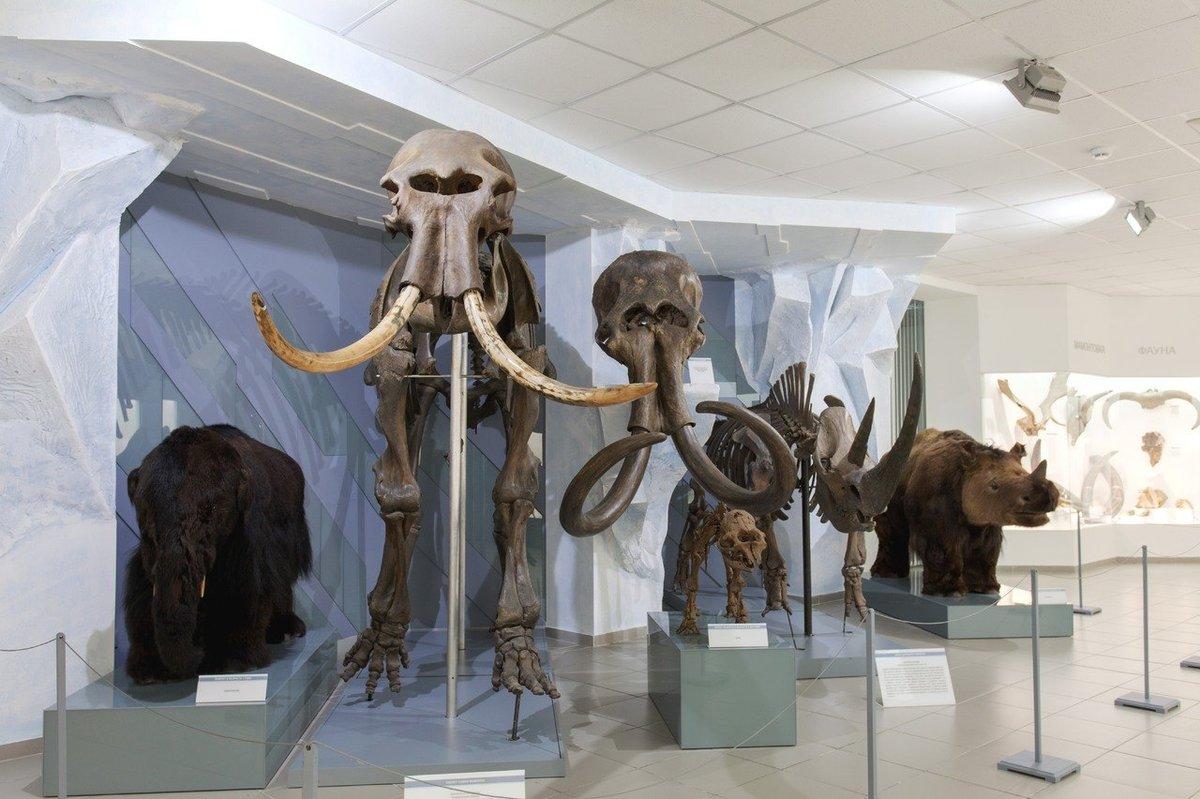 постинге картинка музейных экспонатов начала водяной
