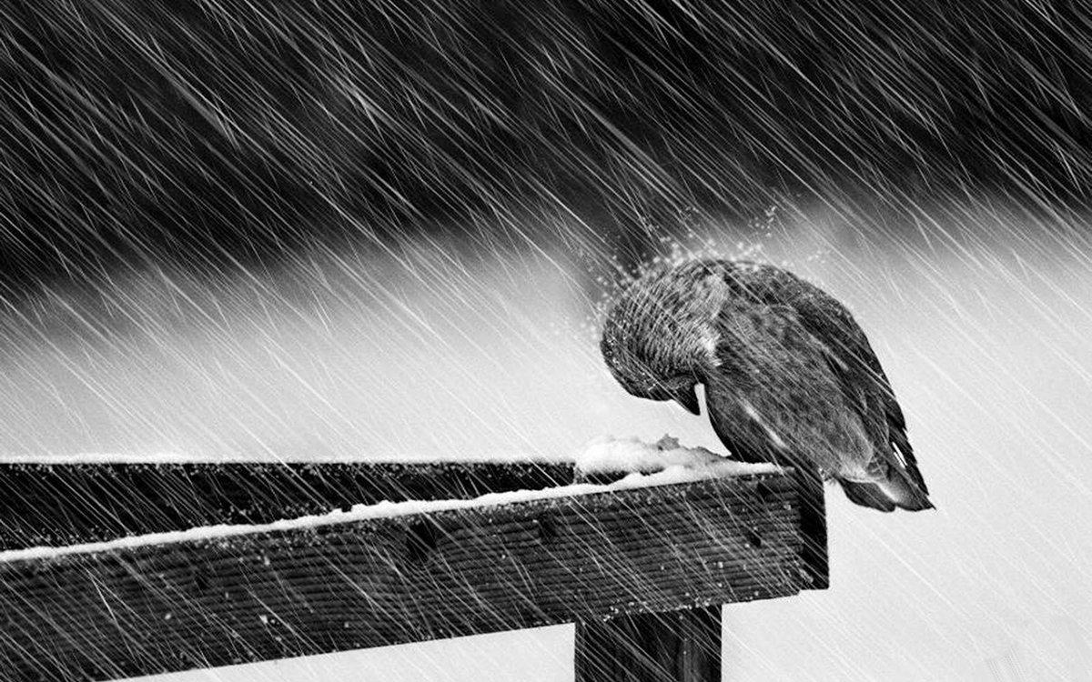 Добрым, картинки о печали и грусти с надписями