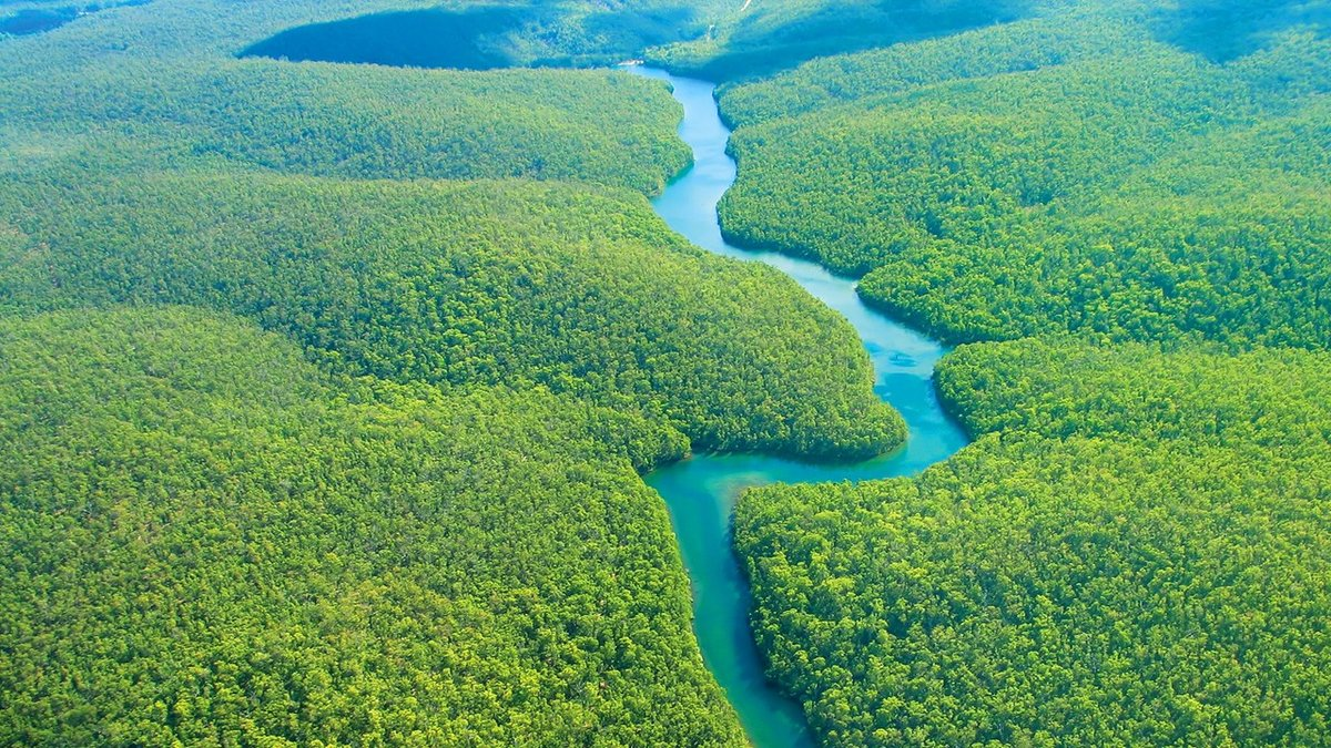 amazon river Explore the wonders of the world's largest rainforest on our exclusive amazon river cruise.