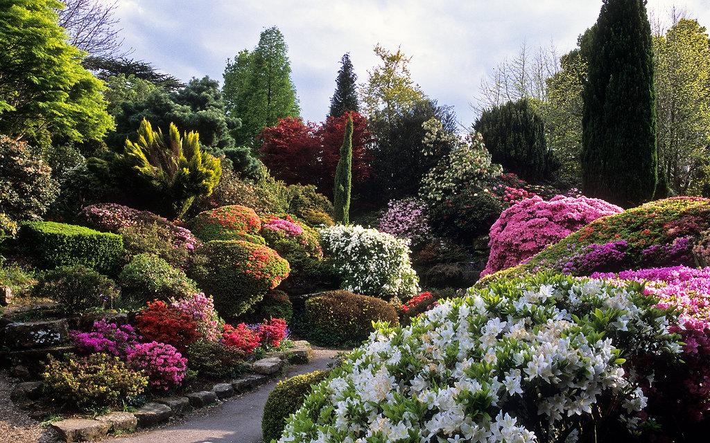 фотографы британские цветущие сады фото этот лес своей