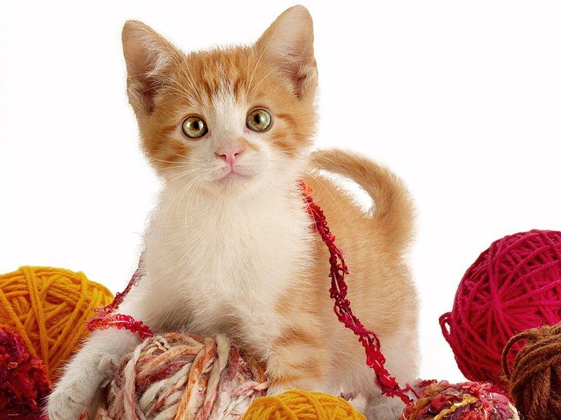 Котенок с клубками
