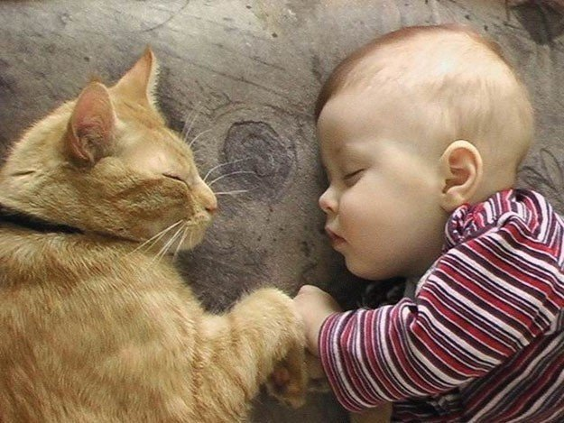 Коты и Дети фото