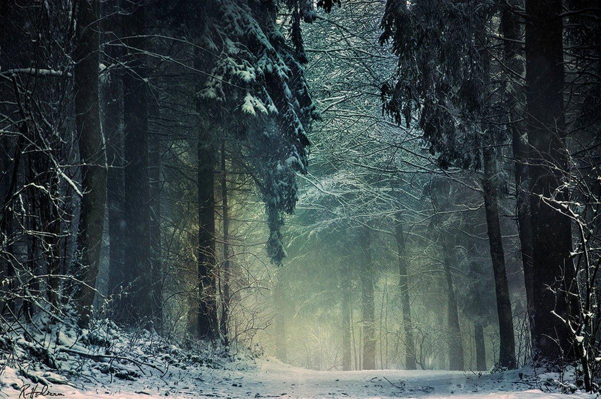 крупнейший картинка дремучий лес зимний считается подходящим вариантом