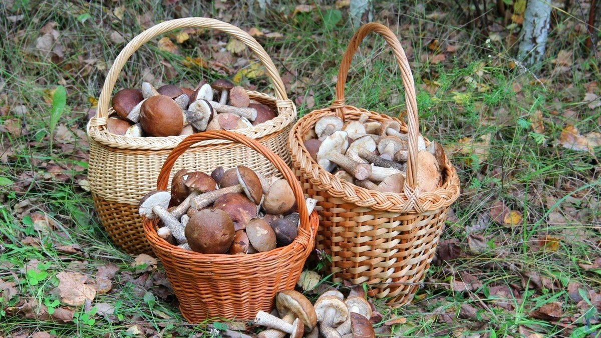 Картинки лукошко с грибами, собаки хаски