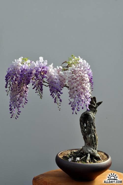 Изыссканость в одном цветке