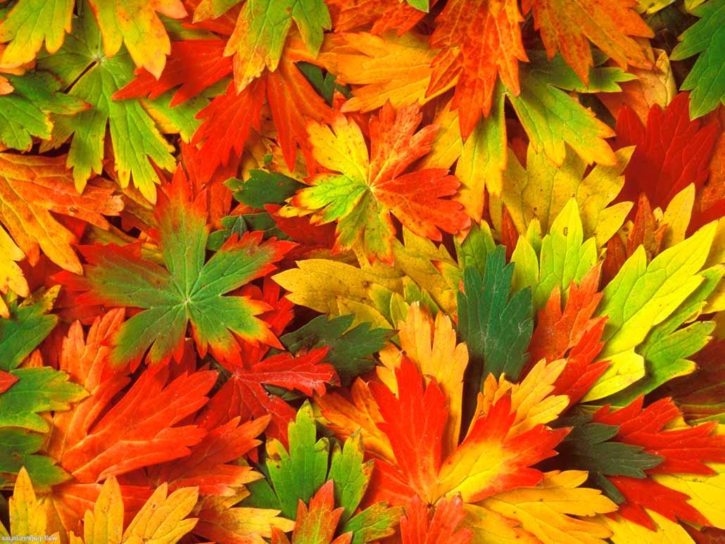 красивые картинки природы осенней