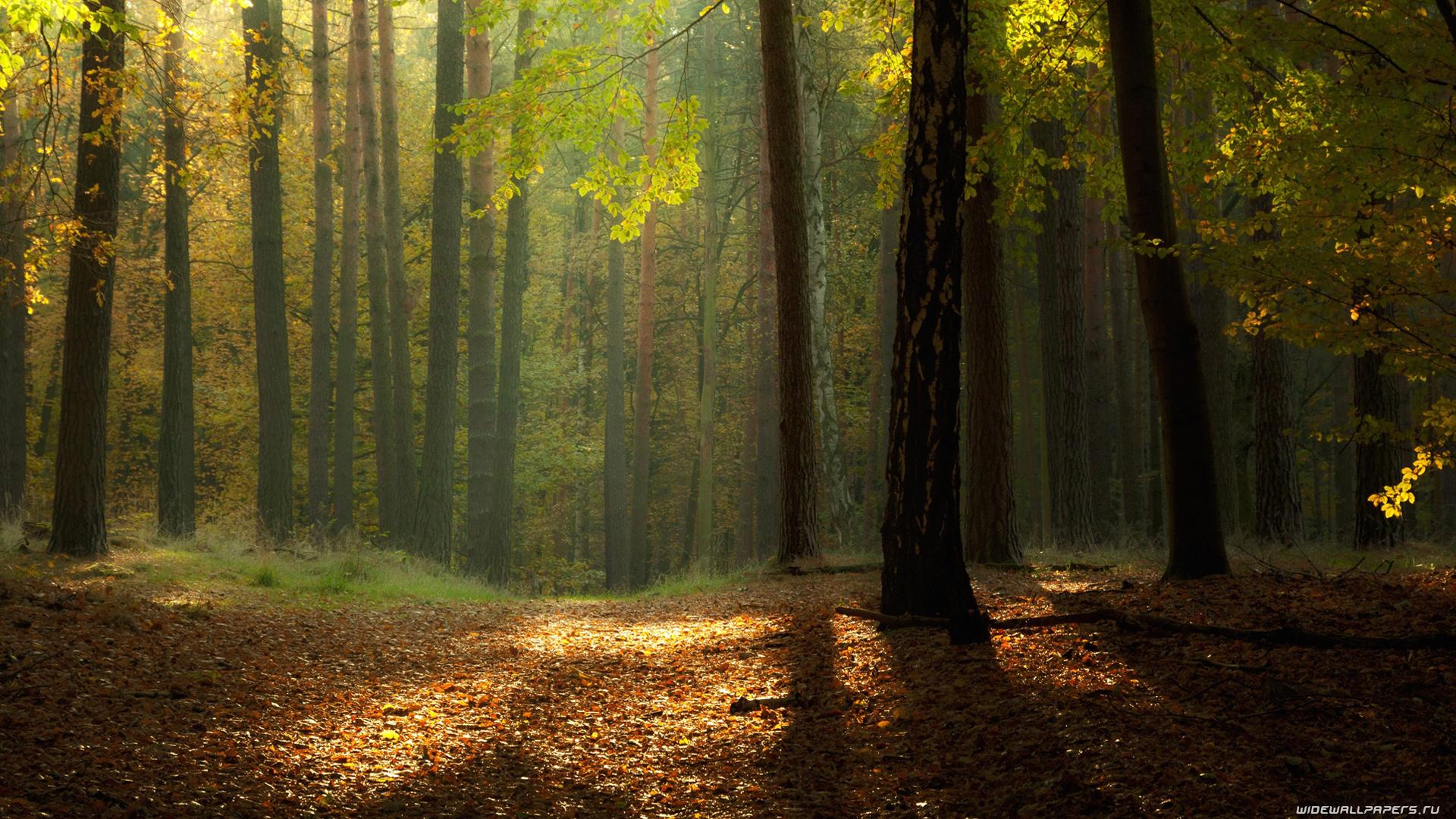 Download Wallpaper High Resolution Forest - orig  Snapshot_28143.net/get-pdb/34158/643ab35e-514b-4650-8006-e13a41146a83/orig