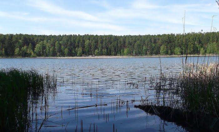 Озеро боровушка еткульский район рыбалка