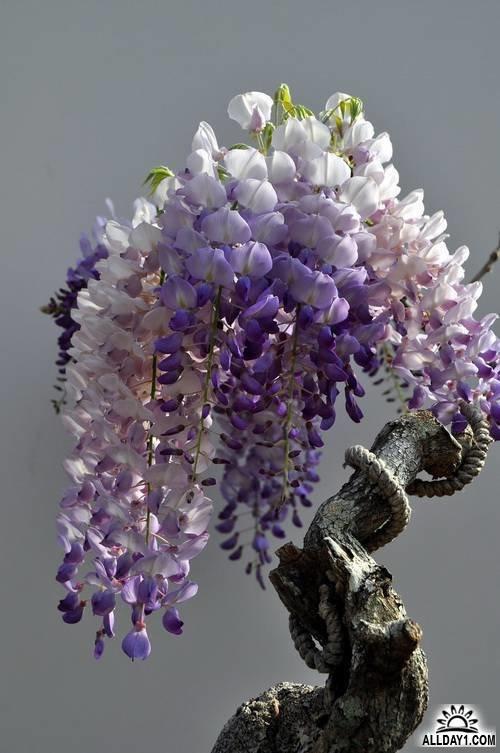 Неповторимый цветок