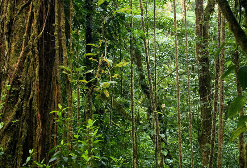 a general information on tropical rainforest Characteristics of the tropical equatorial rainforest - find out about the distribution, climate, soil and structure of vegetation in the tropical equatorial rainforest.