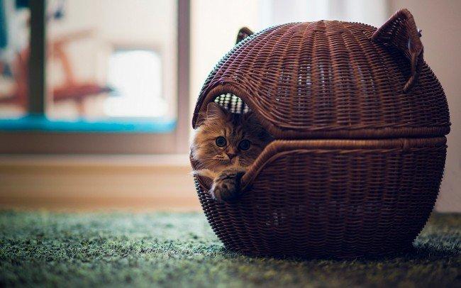 Один из вариантов забавной корзинки для кота