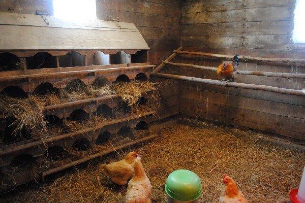 оформления, операции курятник на три курицы конечно