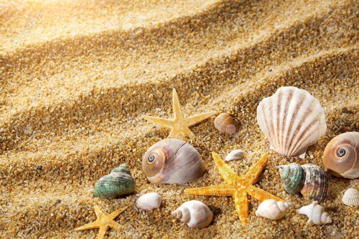 Ракушки на песке крупным планом со звездами.