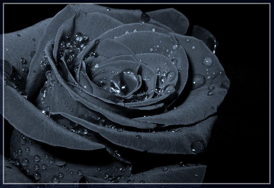 Про собаку, открытки розы черные