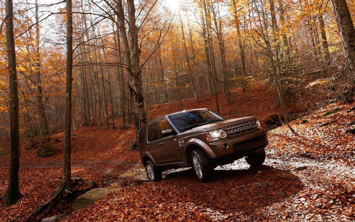 эти машина в лесу картинка для нас