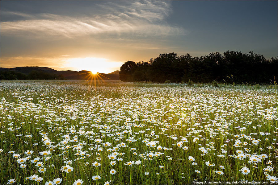 Картинки поле ромашек