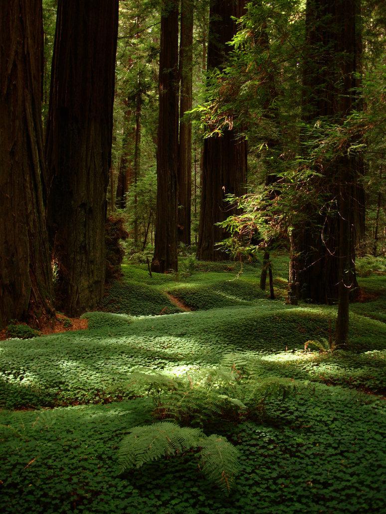 лучшие фотографии леса считаете