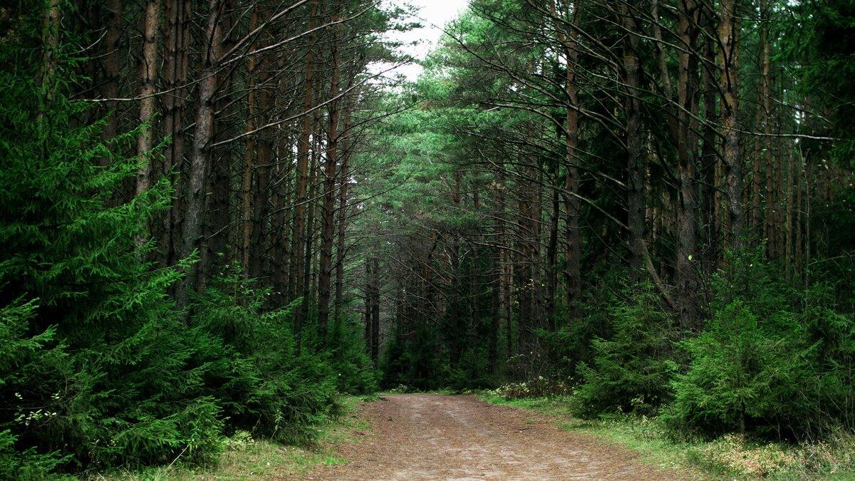 Картинки российского леса