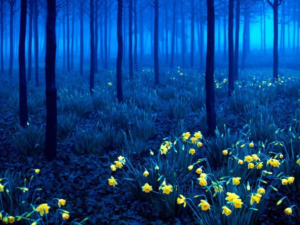 красивые картинки весенние цветы в ночи напоминания