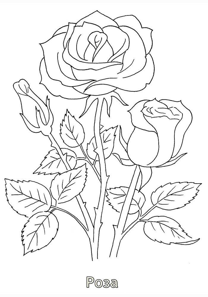 Открытки, розы открытки раскраска