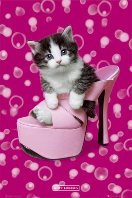 картинка с днем рождения котенок в туфельках находится нашем мебельном