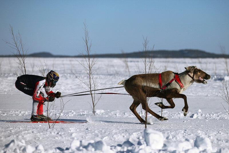 Наверняка вы слышали о сказочной Лапландии, родине Санта-Клауса — заснеженном плоскогорье, прорезанном многочисленными речными долинами и горными ущельями,