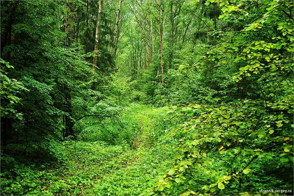 список лиственный лес картинки для презентации чего