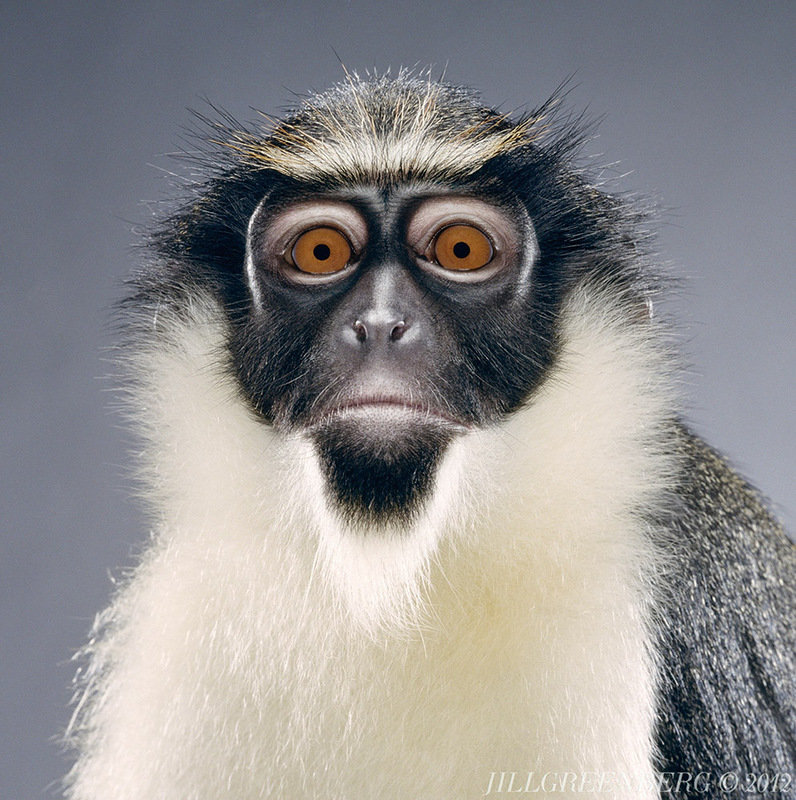 Юбилеем квиллинг, работа приколы картинки обезьяны