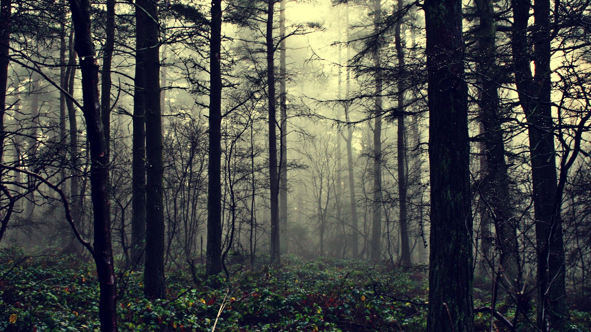 картинки лес для рабочего стола