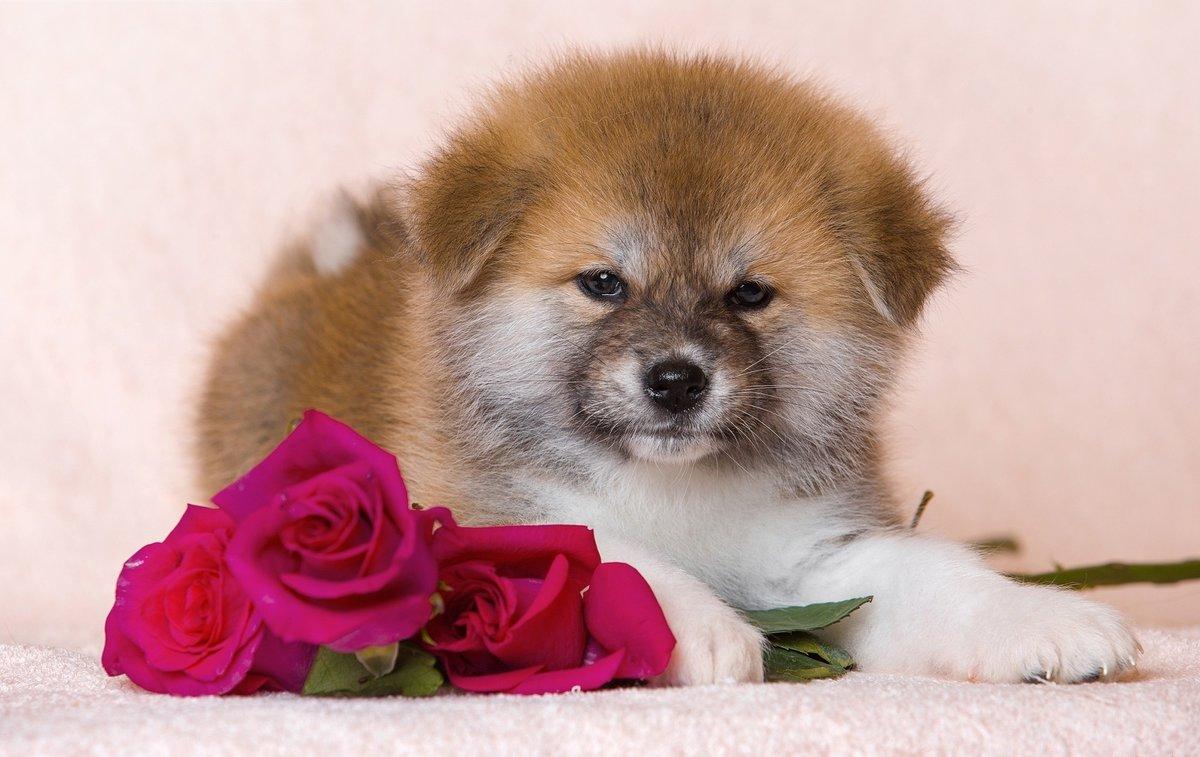 Смайлики, красивые собачки открытки