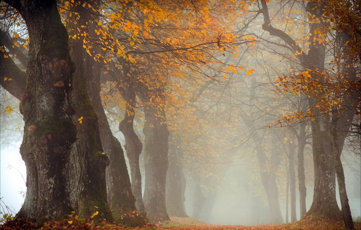 Мрачное осеннее утро в тумане.