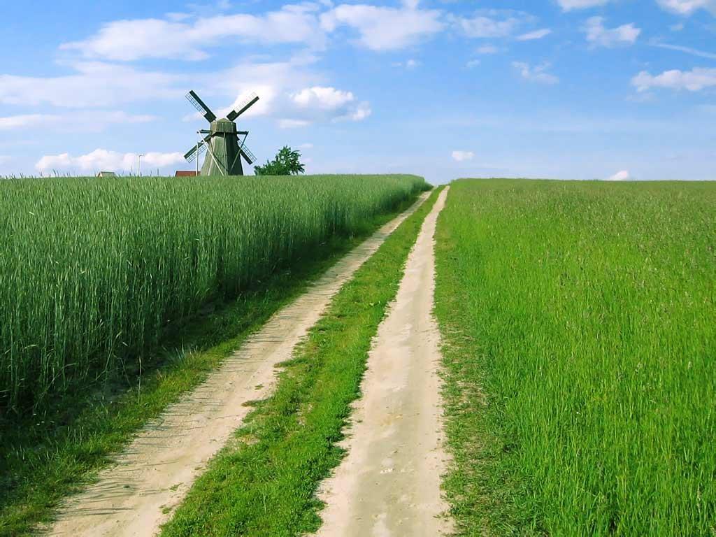 Сельская дорога своими руками фото 294