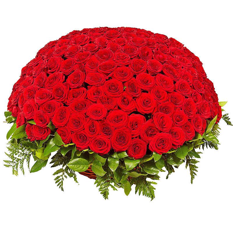 Живые цветы, большой букет роз фото