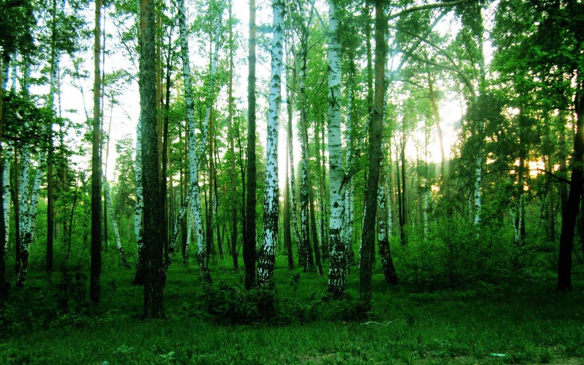 для фотографии леса для печати может быть