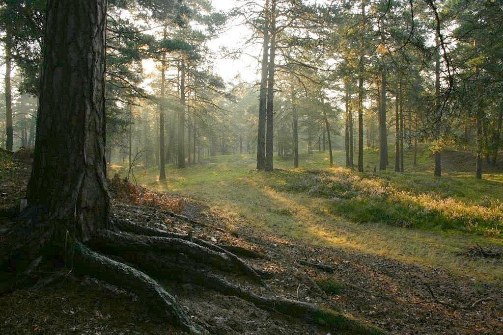 губа фото в лесу после дождя сделано