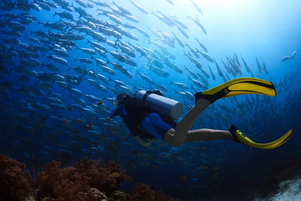 being amphibious scuba diving and freediving Freediving and scuba are different, so naturally freediving with sharks and scuba diving with sharks is different.