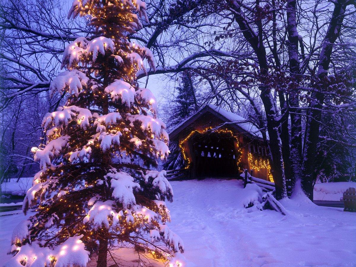 Картинки наряженная елка и снег, открытка собакой открытки