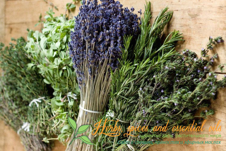 Итальянские травы - что входит в состав, как их применять правильно, в какие рецепты добавляют, какими вкусовыми свойствами они обладают, фото