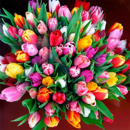 картинки тюльпаны цветы
