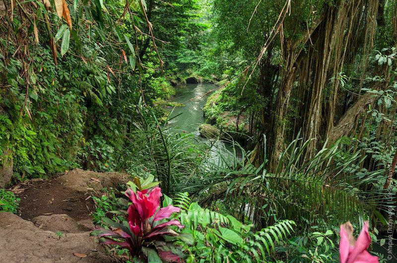 джунгли в индии фото знания