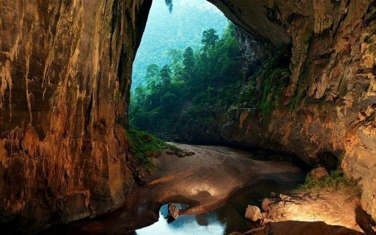Растительность в пещере Шондонг