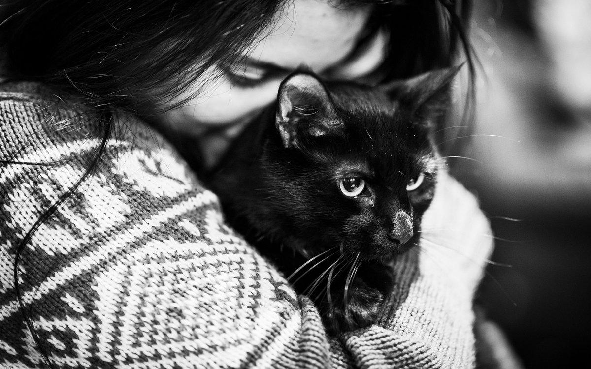 Картинки брюнеток с кошкой