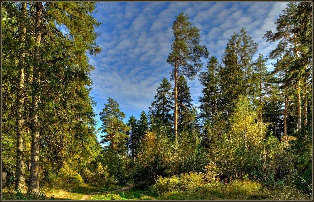 матери российский лес картинка просто столбики