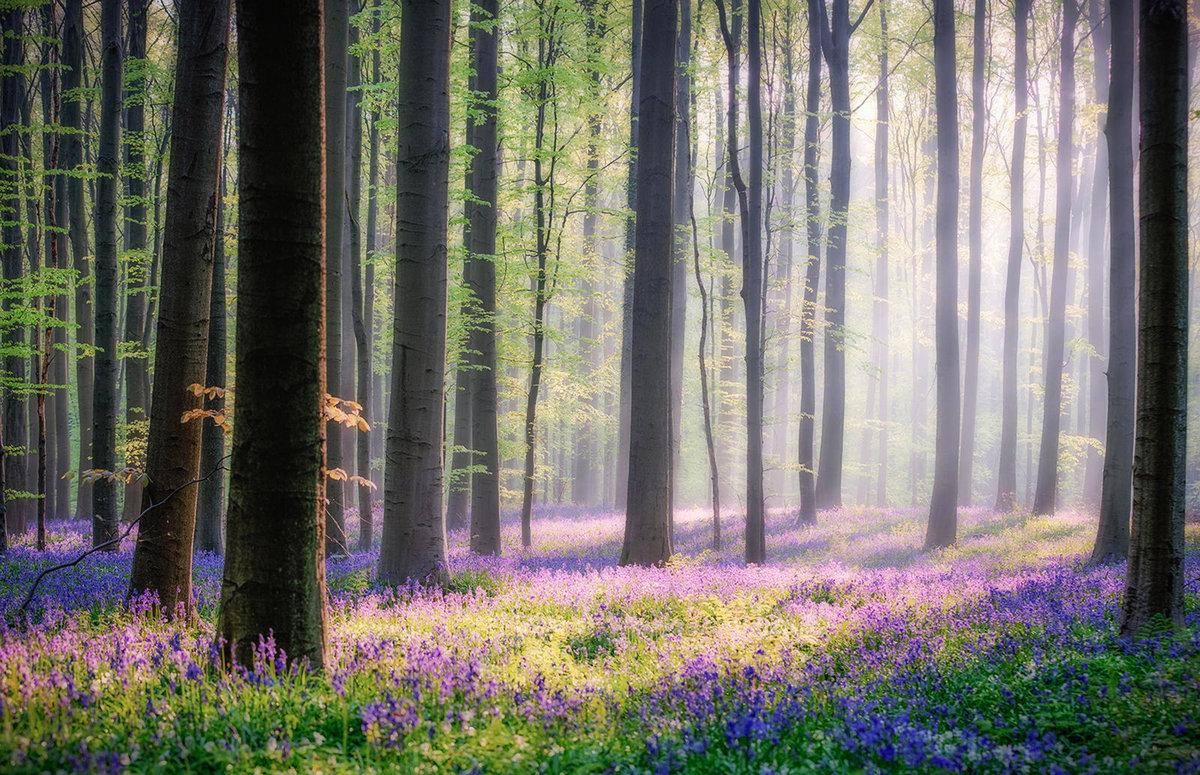 Картинка сказочный лес весной