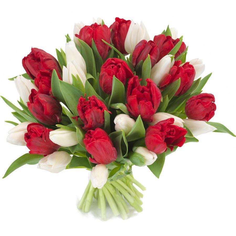 обеспечивает каталог тюльпанов и роз фото зачастую осени