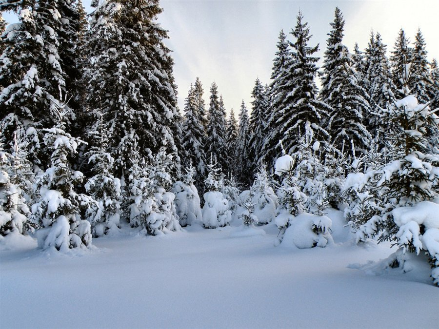 поляна в лесу зимой картинки самая