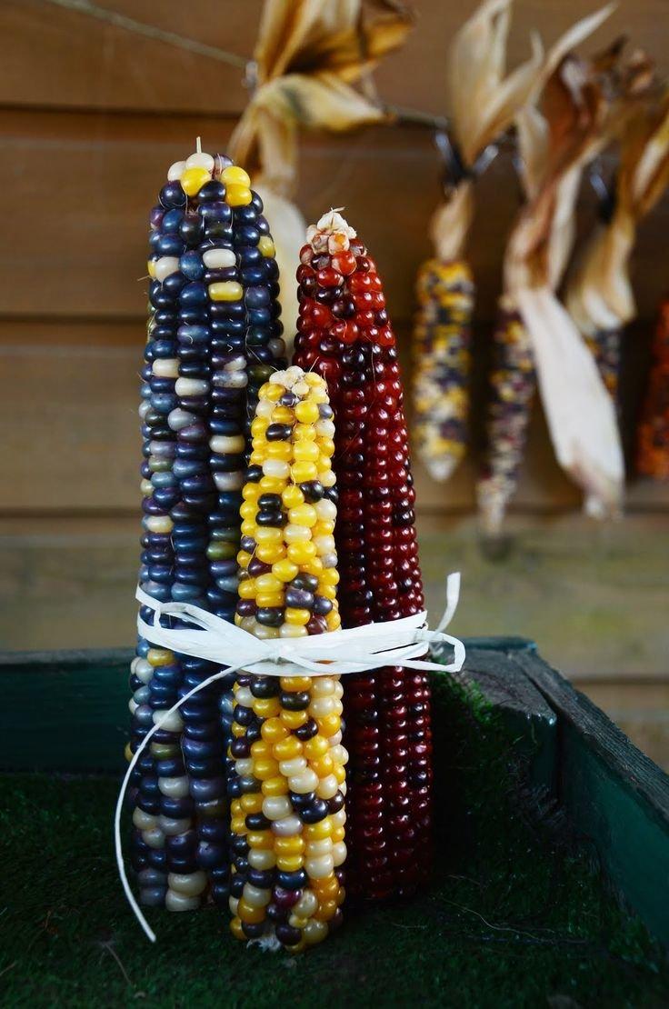 В осенний период початки кукурузы высушивают и используют для украшения интерьера. Это может быть украшение на двери или венок в доме, предварительно кукурузу можно разукрасить различными цветами.