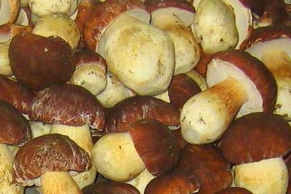 без сколько надо варить грибы перед жаркой САЙТ