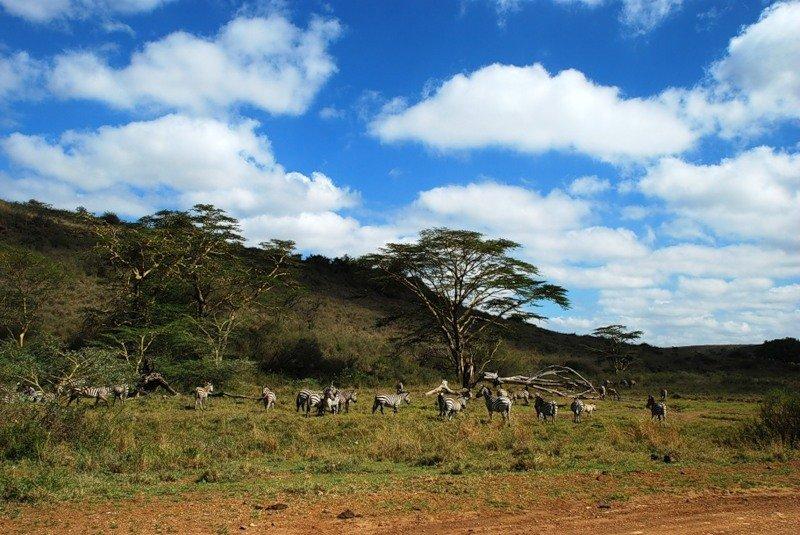 звёздное африка территория картинки приготовить желе калины