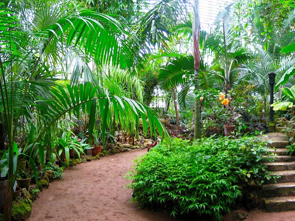Картинки ботанического сада в спб